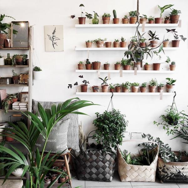 floristry, wall, flower arranging, home, interior design,