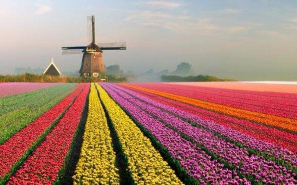 flower, field, plant, land plant, flowering plant,