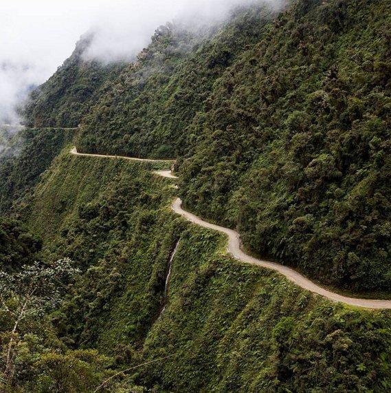 Coroico, green, forest, rainforest, tree,