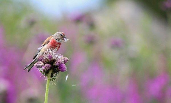nature, bird, flora, flower, fauna,