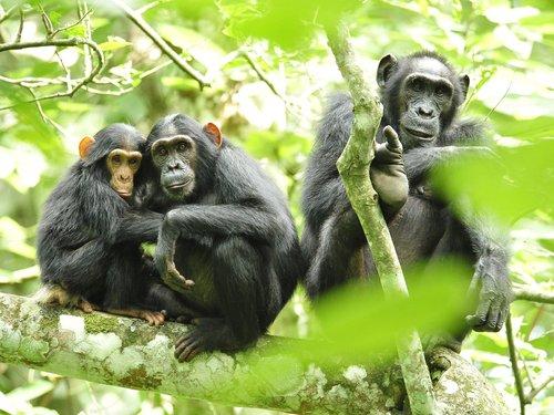 Mount Nimba Strict Nature Reserve, Guinea/Côte D'Ivoire