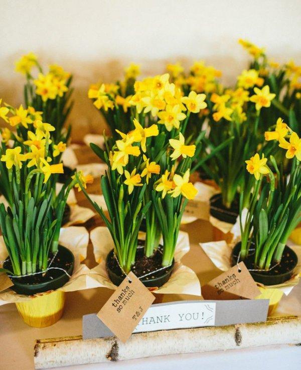 flower, plant, yellow, flowering plant, flowerpot,