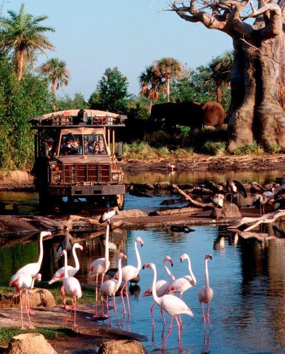 vacation,zoo,water bird,