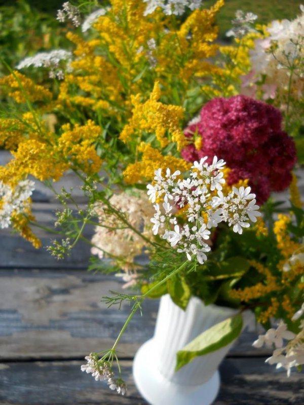 flower, plant, flowering plant, spring, shrub,