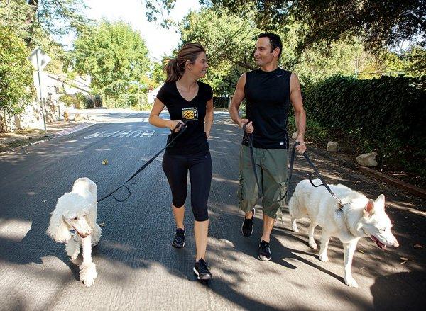 dog, dog walking, walking, sports, dog like mammal,