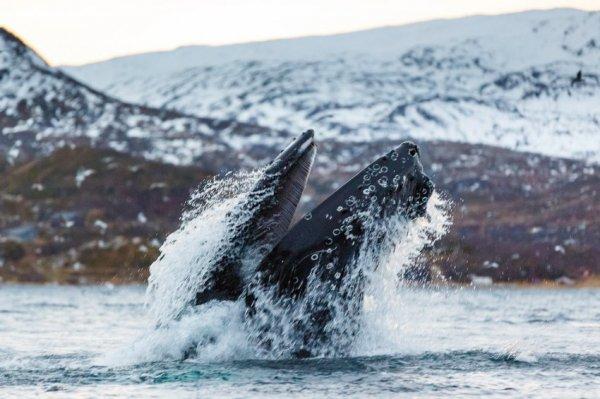 Go Whale Watching with Mark Carwardine
