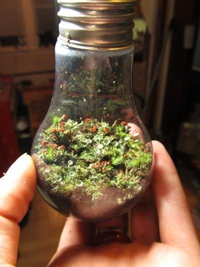plant,flower,produce,herb,