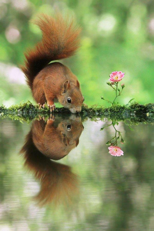 nature,mammal,vertebrate,wildlife,fauna,