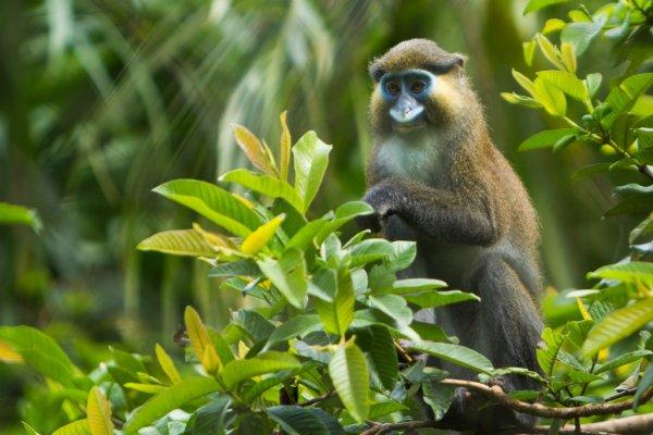 Dja Faunal Reserve, Cameroon