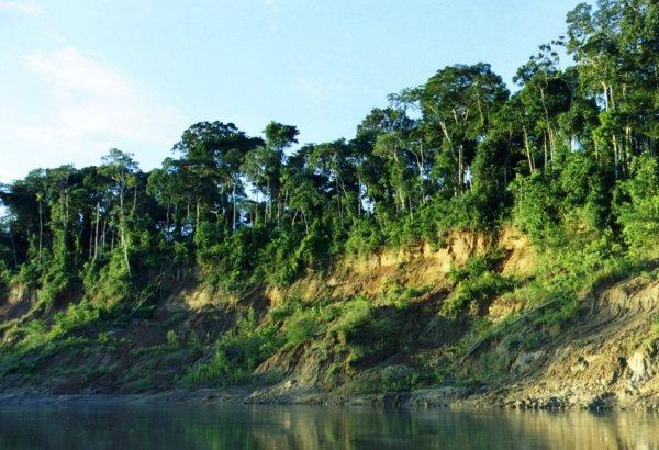 Planting Trees: Forest Conservation, Manu Region of Peru