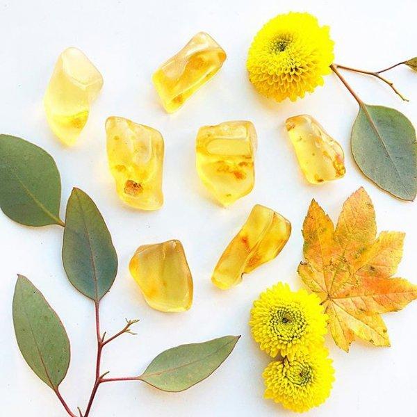 yellow, flower, plant, leaf, petal,