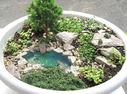 plant,pond,garden,soil,houseplant,