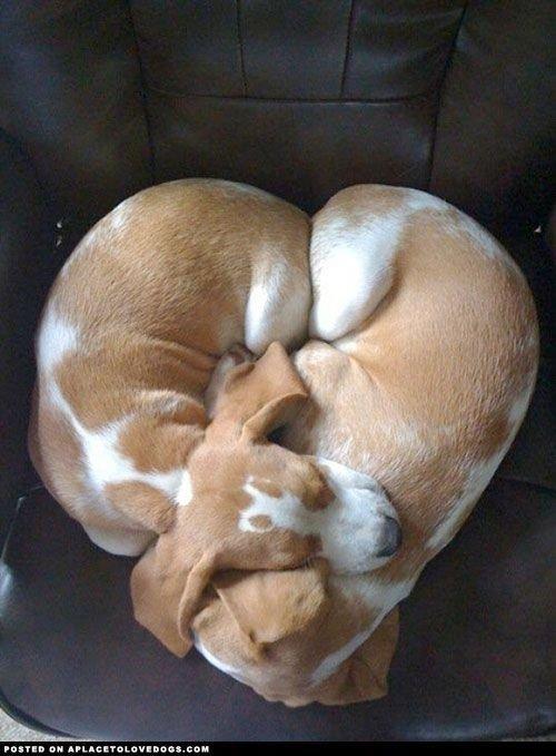 dog,mammal,vertebrate,nose,dog like mammal,