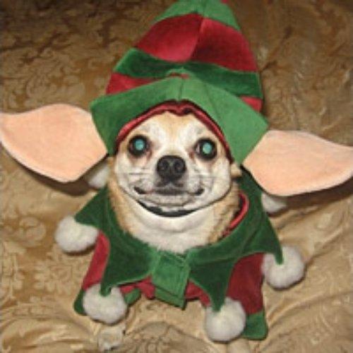 dog like mammal, dog, dog breed, christmas ornament, snout,