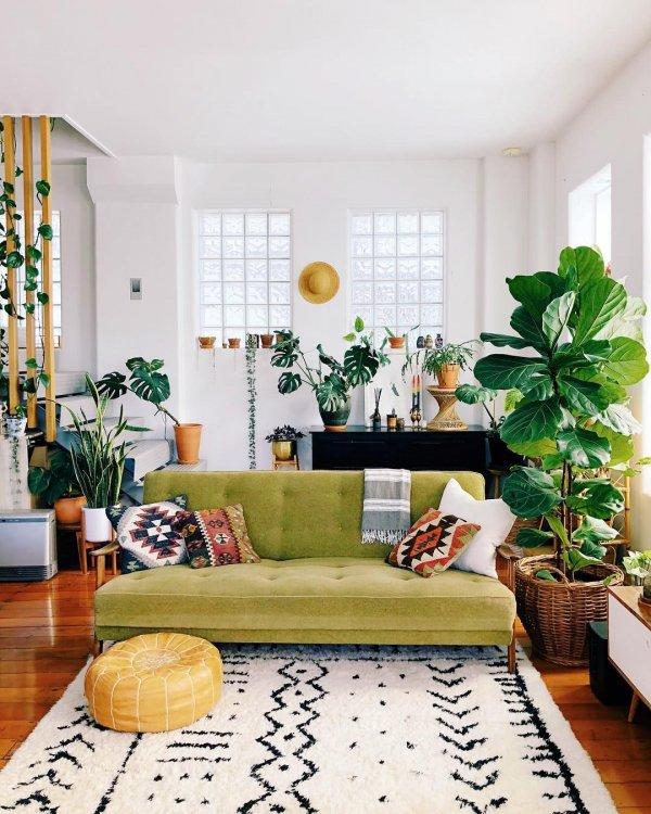Plant, Property, Furniture, Window, Green,