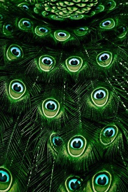 Deep Emerald Green Peacock Feathers