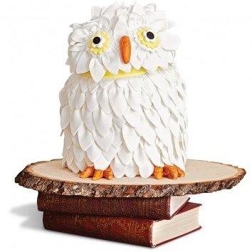 owl,bird of prey,bird,