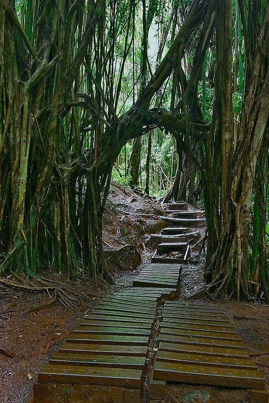 Enchanted Rainforest