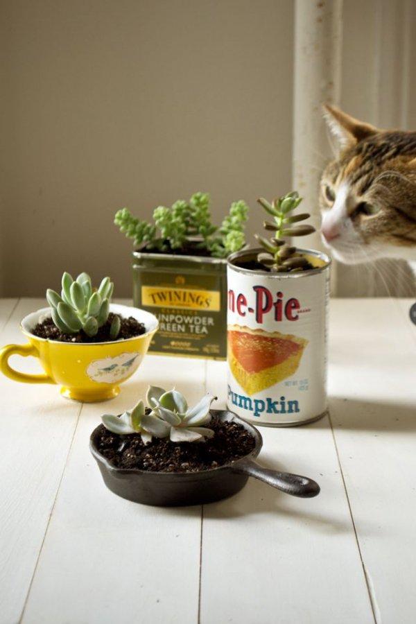 cat,produce,food,meal,pie,