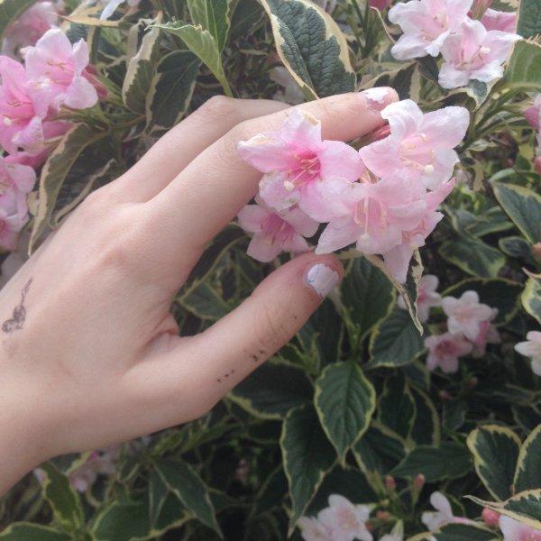 flower,plant,flora,pink,botany,