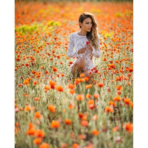 flower, plant, poppy, meadow, grass,