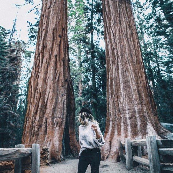 tree, photograph, woody plant, plant, woodland,