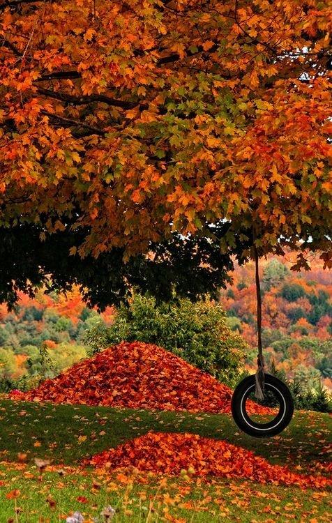 Fall Reward