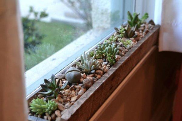 plant,flower,produce,herb,garden,