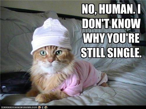 Awais,cat,ICANHASCHEEZEURGER.COM,NO,,HUMAN.,