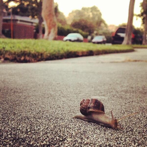 Snail Massage