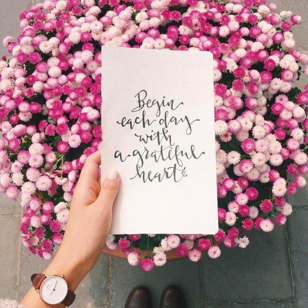 pink, flower, purple, plant, petal,