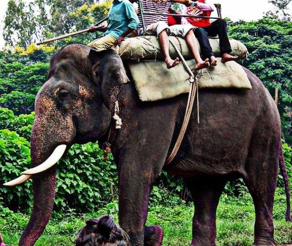 Visit the Elephants of Dubare