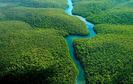 A Trek through the Peruvian Amazon