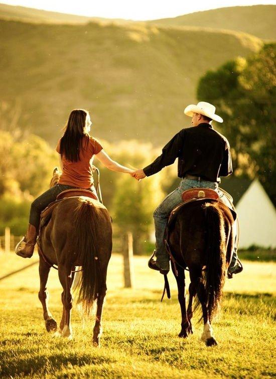 Facebook,horse,equestrianism,stallion,mustang horse,