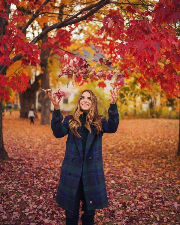 tree, red, autumn, season, plant,