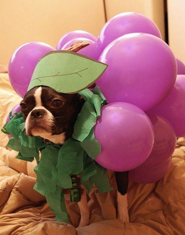 Looking Grape