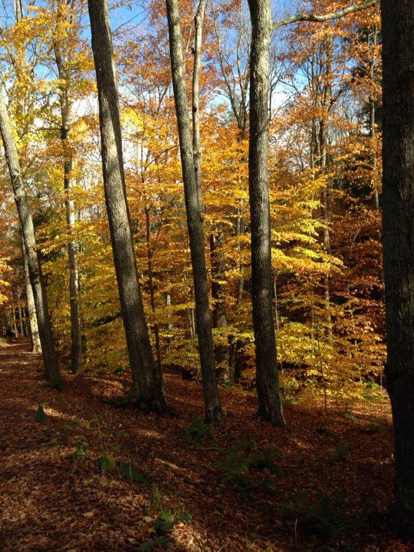 Vermont – Marsh - Billings – Rockefeller National Historic Park
