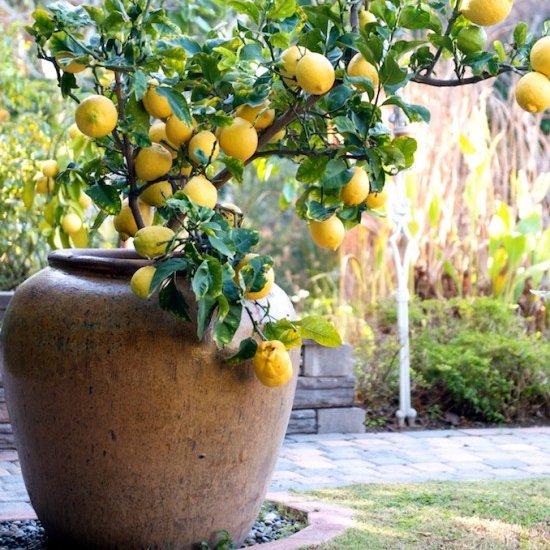 food, plant, citrus, produce, fruit,