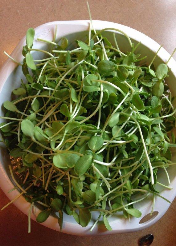 produce, plant, vegetable, food, flowering plant,