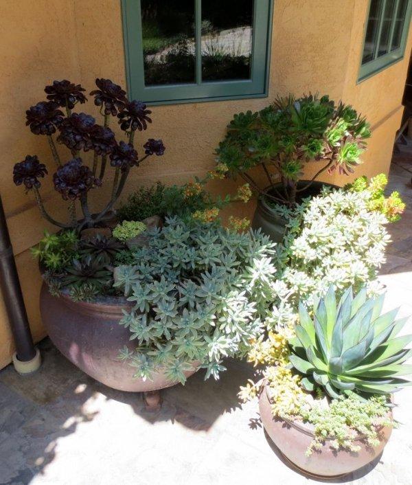 plant,flower arranging,flower,floristry,floral design,