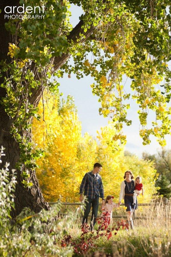 tree,ecosystem,season,autumn,woodland,