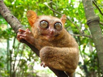 7 Cutest Wild Animals in the World ...