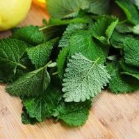 7 Reasons to Use Lemon Balm ...