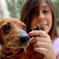 8 Tips for Choosing a Pet Sitter ...