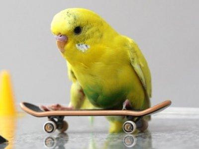 7 Reasons Why Birds Make Great Pets ...