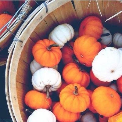 Homemade Pumpkin Beauty Treatments You Can Create Today ...