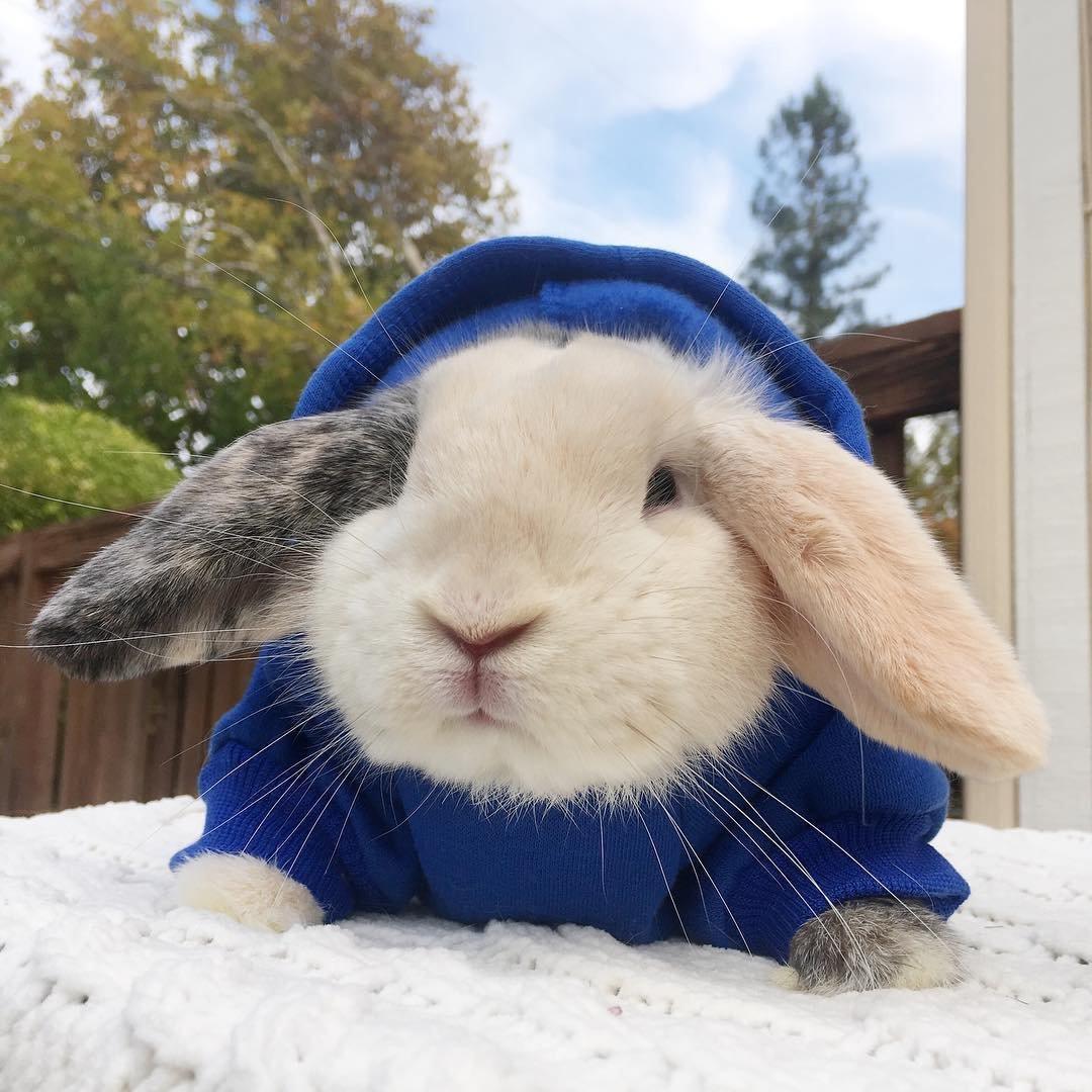 Кролик картинки прикольное