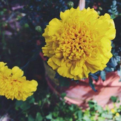Plants Thatll Bring Pollinators to Your Garden ...