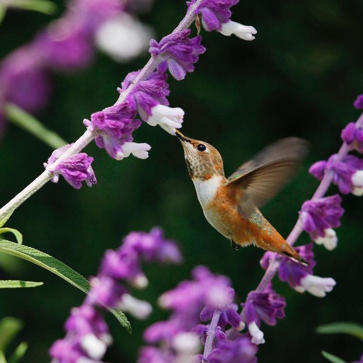 Beautiful  Flowering  Plants  That Attract Hummingbirds  ...