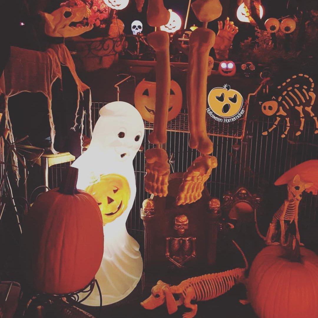 Cinema 🎞 for Scaredy Cats 🙈: 24 Cheesy 😝 Halloween Flicks 🎥 ...